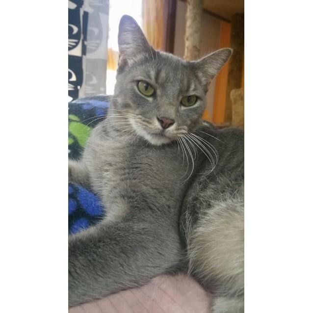 Photo of Oliva