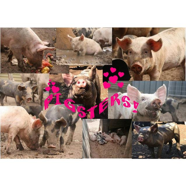 Photo of 9 Beautiful Piglets