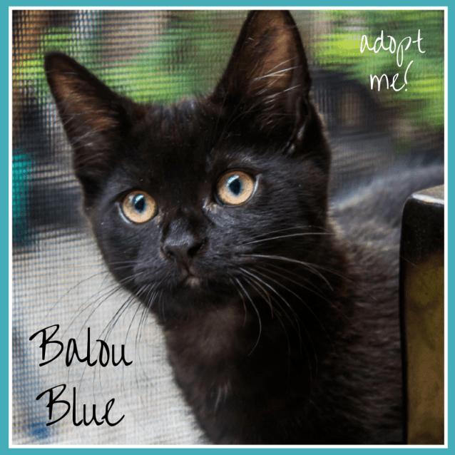 Balou blue