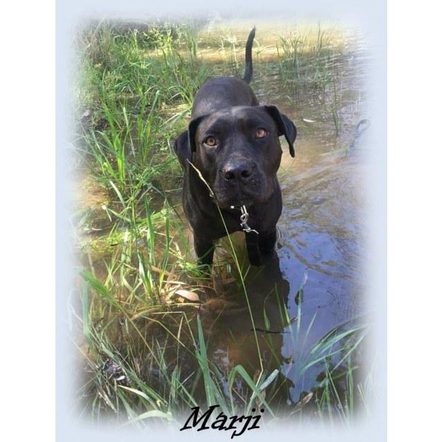 Photo of Marji