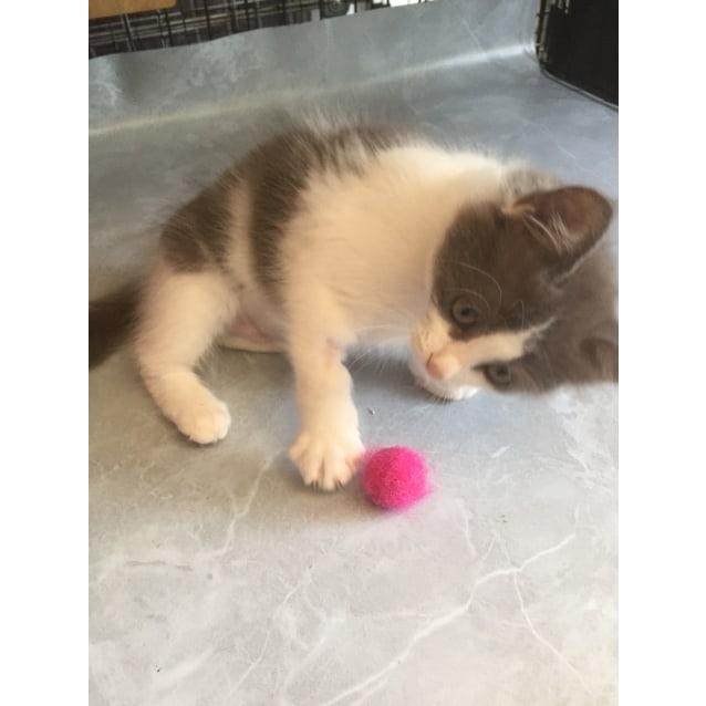 Photo of Rescue A Cat Inc.   Didi