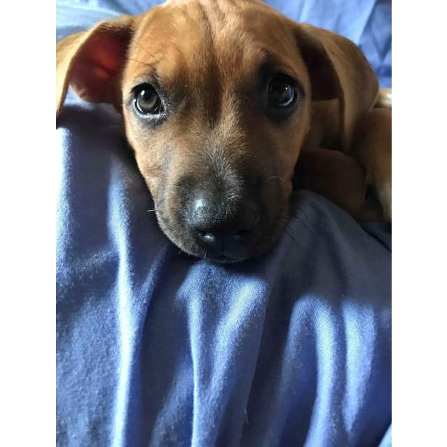 Wally S Dog Rescue