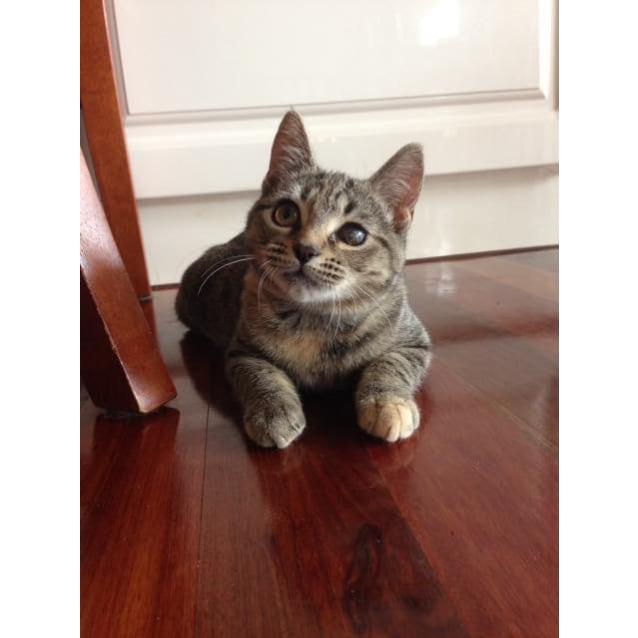 Photo of Starla