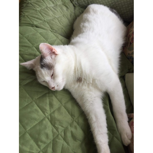 Photo of Ernest (Located In Camberwell)