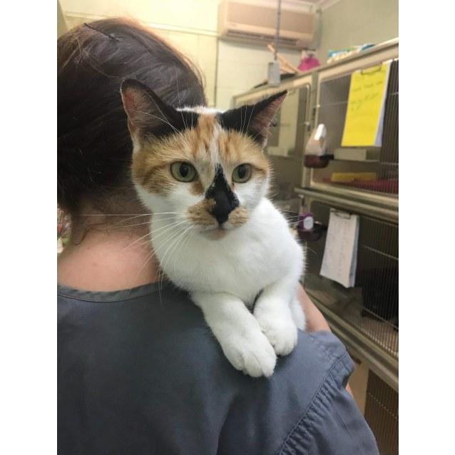 Photo of Kitty