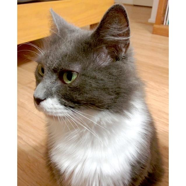 Photo of Mary Gray The Very Pretty Floofy Cat!
