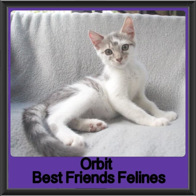 Photo of Orbit