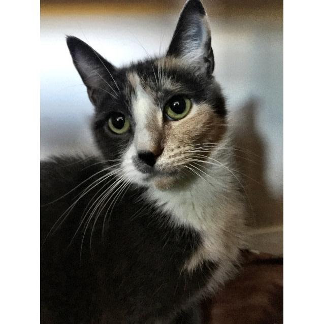 Photo of Mittens The Wardrobe Cat