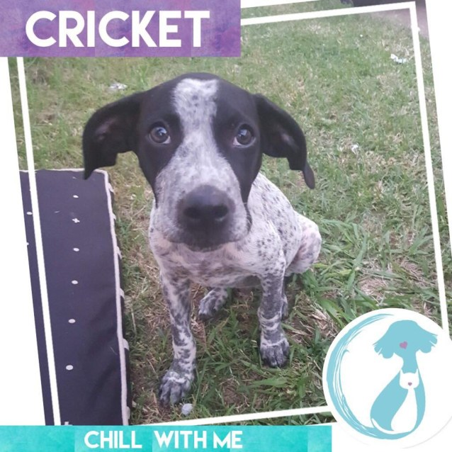 Photo of Cricket
