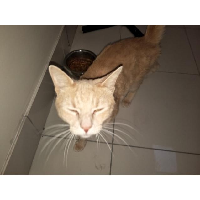 Photo of Mr G Aka Mr Ginger