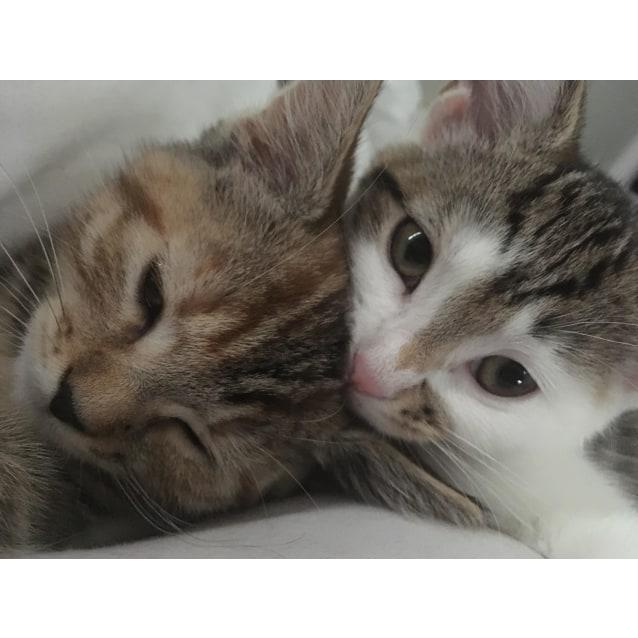 Photo of Peakaboo & Bobby  ~Rainbow Cat Rescue~