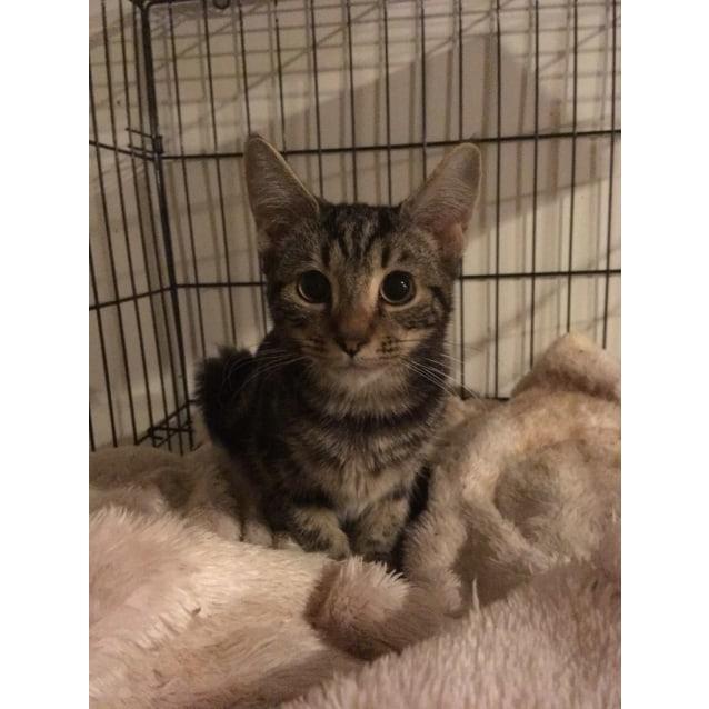 Photo of Katarina ~Rainbow Cat Rescue~