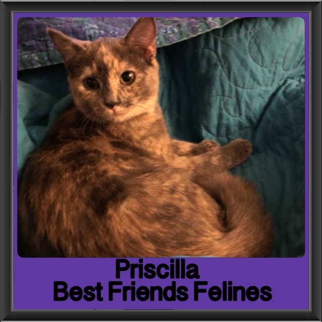 Photo of Priscilla
