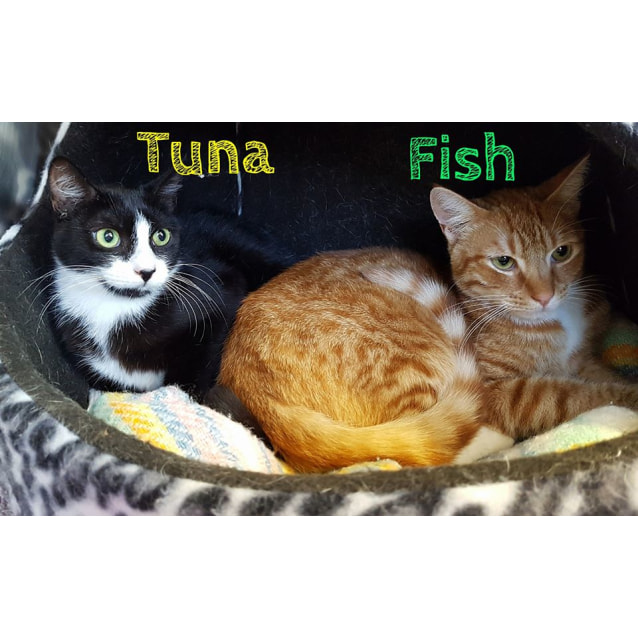 Photo of Tuna & Fish
