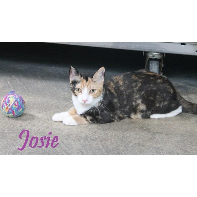 Photo of Josie