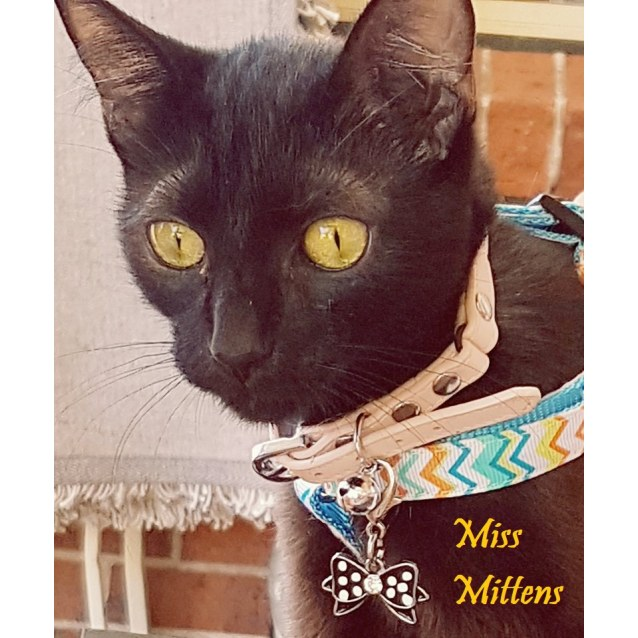 Photo of Miss Mittens