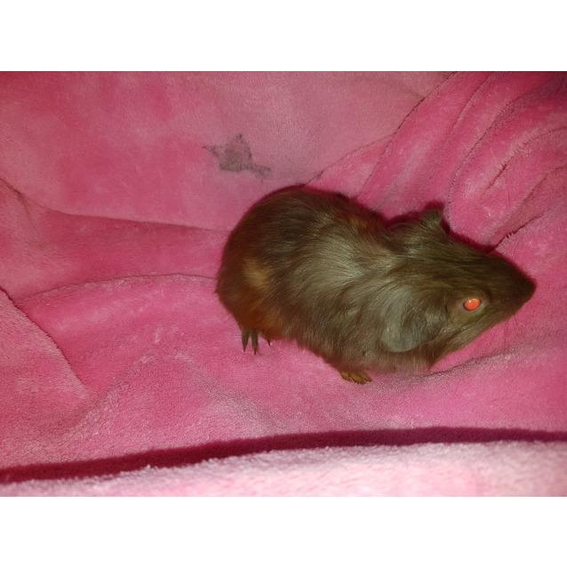 Photo of Gilbert