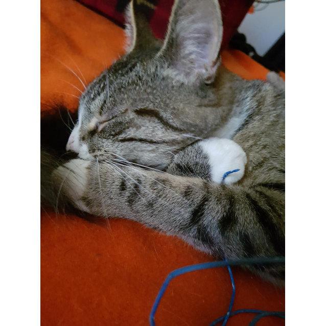 Photo of Kitt
