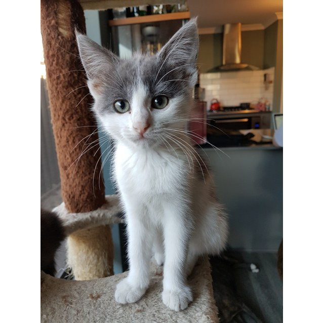 Photo of Nebula * Now On Trial With My New Family*
