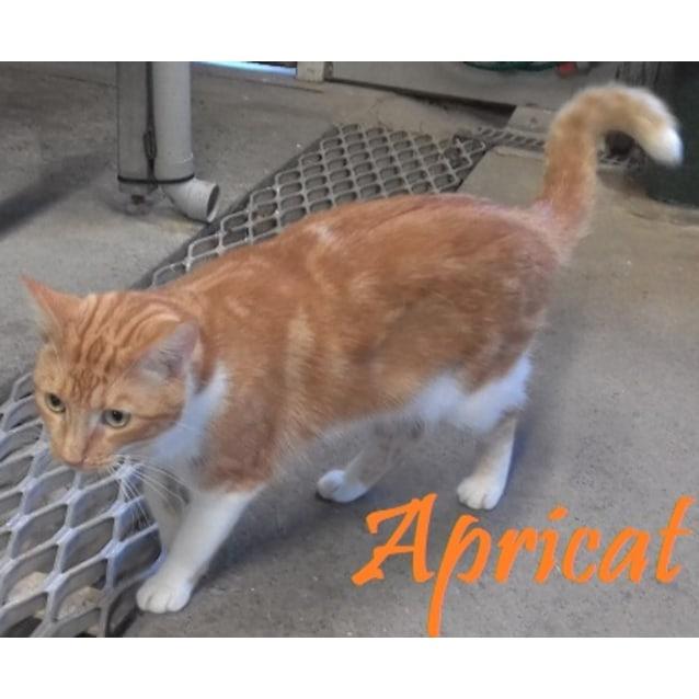 Photo of Apricat