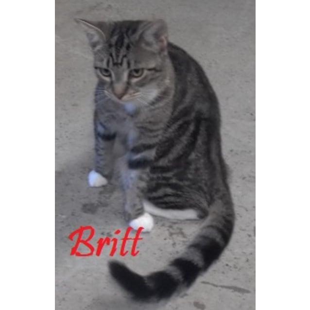 Photo of Britt