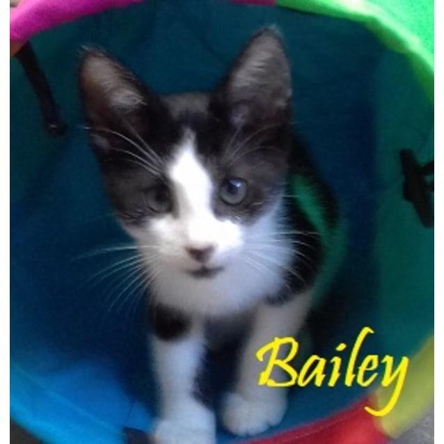 Photo of Bailey