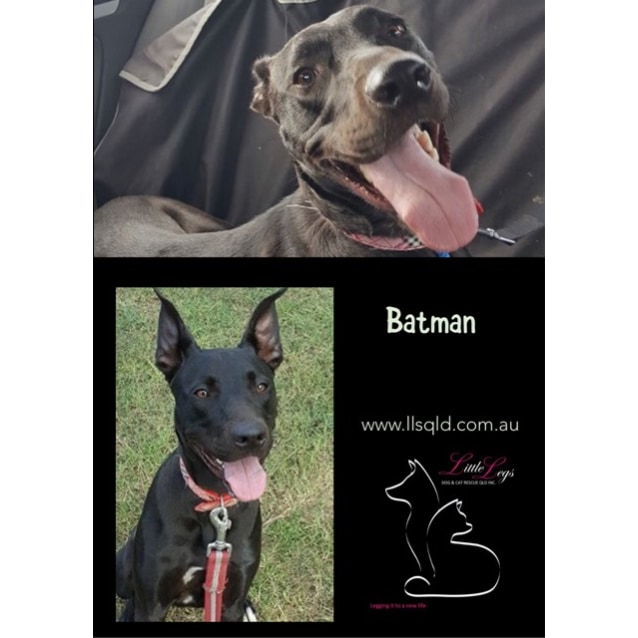 Photo of Batman