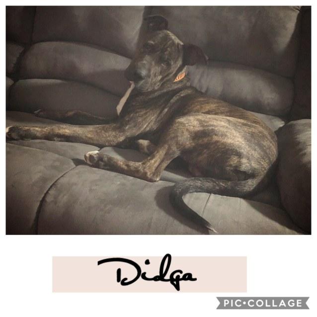 Photo of Didga