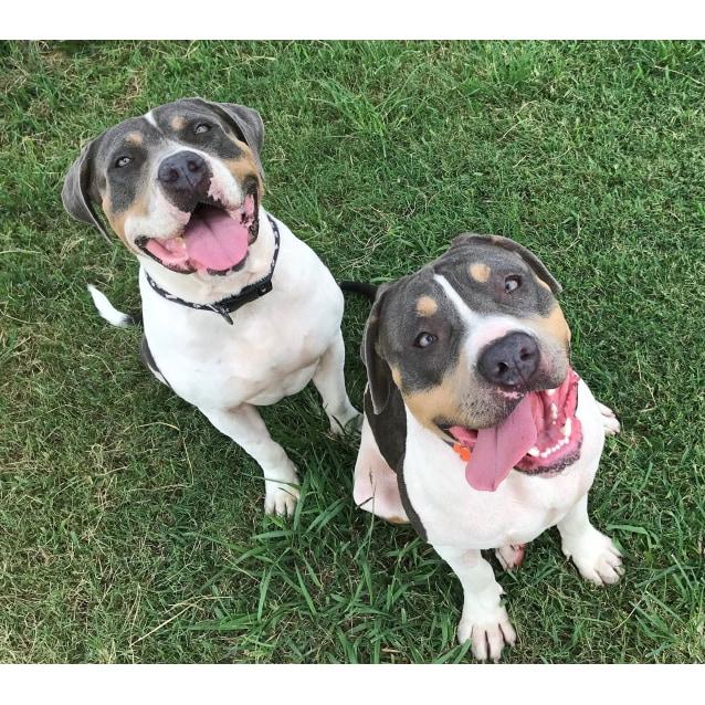 Photo of Harper And Atticus