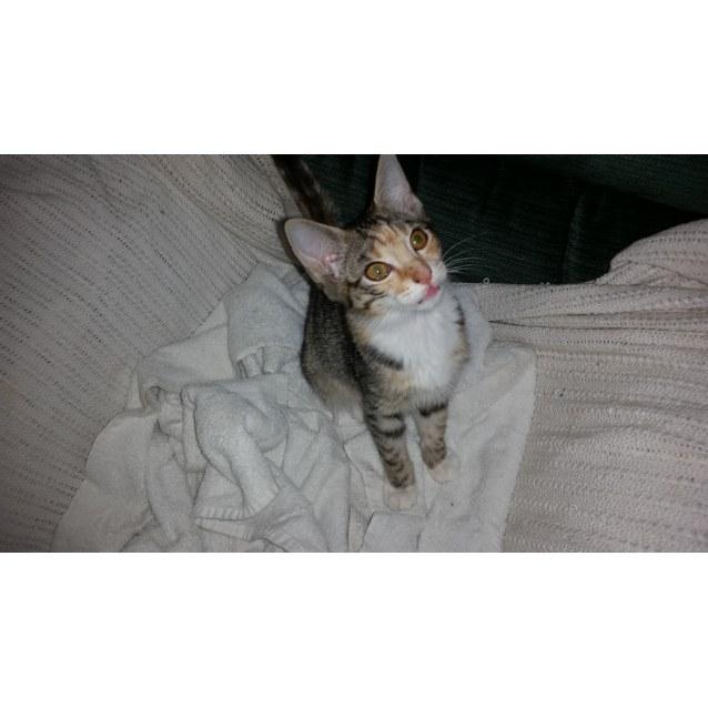 Photo of Ciara