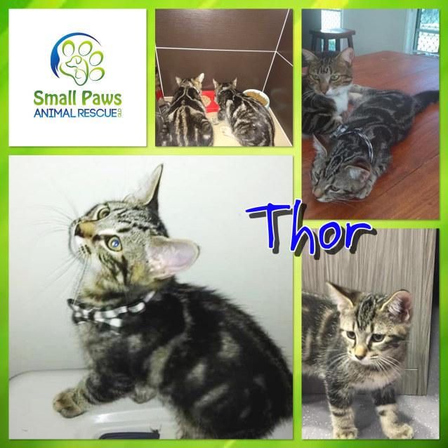 Photo of Thor