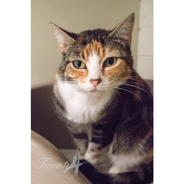 Photo of Dotti (0630)