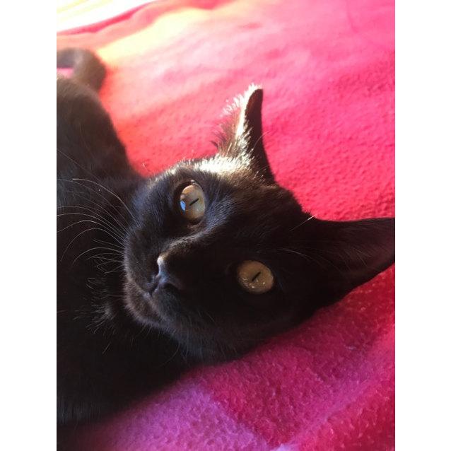 Photo of Henrietta (Located In Armadale)