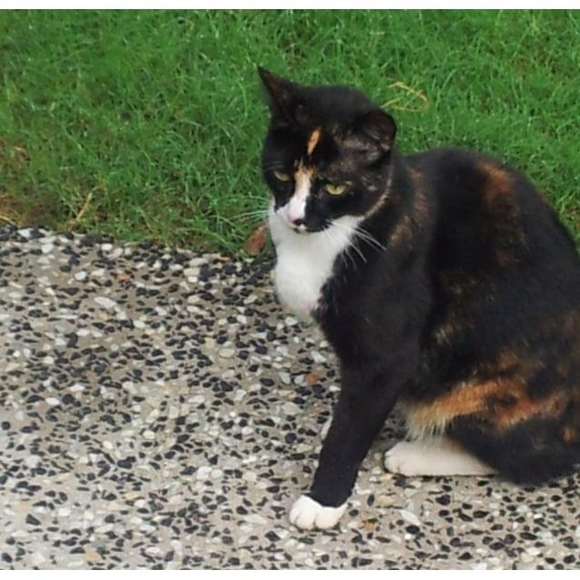 Photo of Kat
