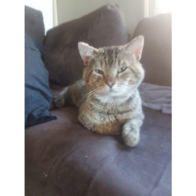 Photo of Stumpy ~Rainbow Cat Rescue~