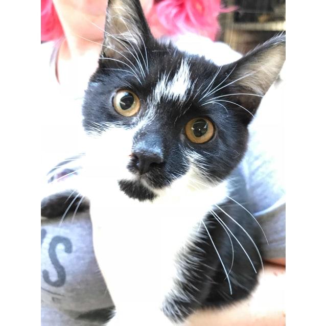 Photo of Liam ~Rainbow Cat Rescue~