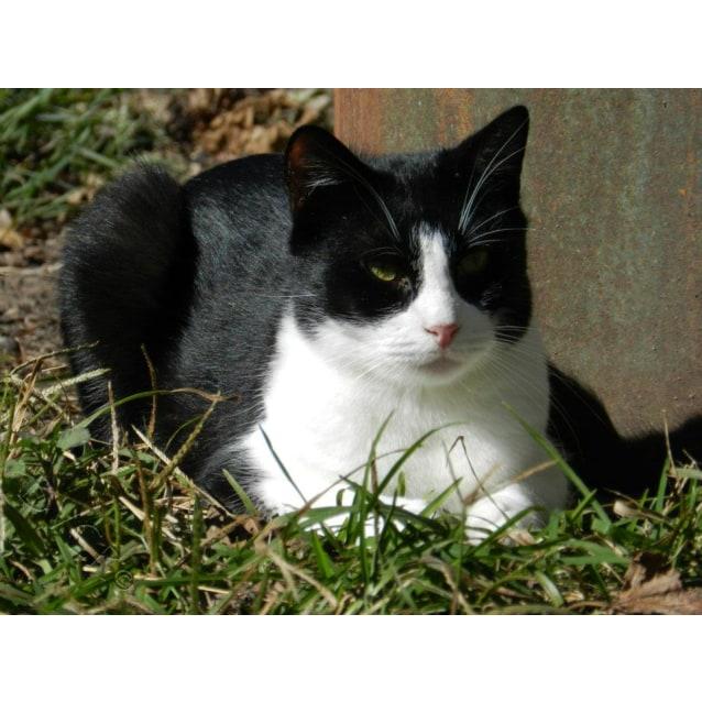 Photo of Meeke