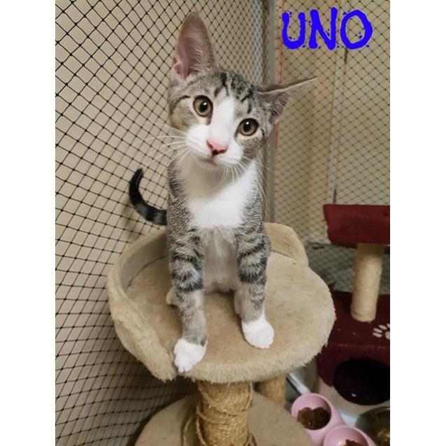 Photo of Uno