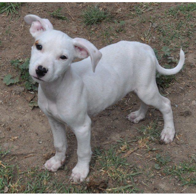 Photo of Olly