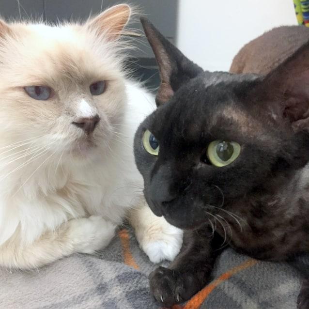 Photo of Remy & Sebastian