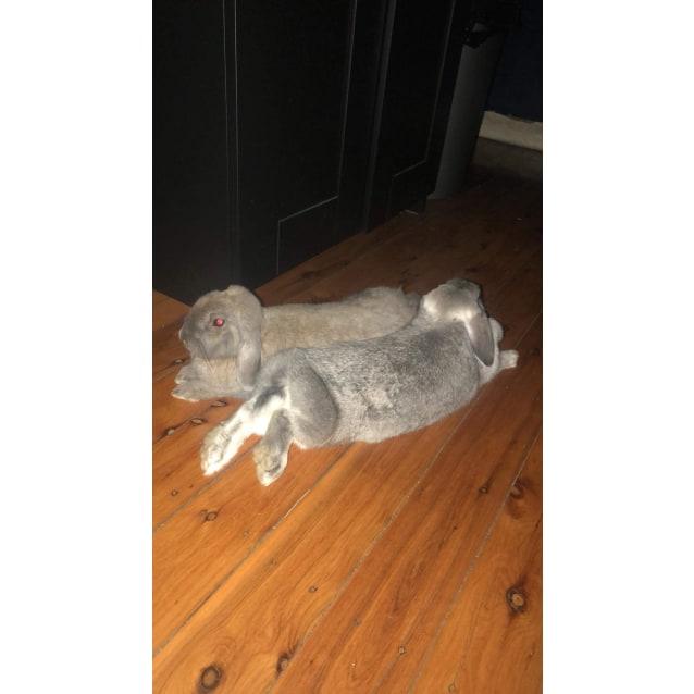 Photo of Baxter & Lulu