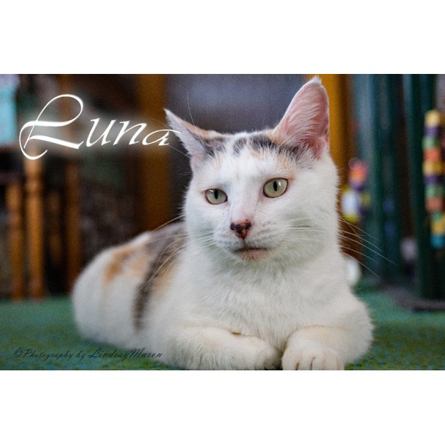 Photo of Sweet Luna