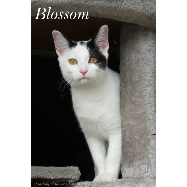 Photo of Beautiful Blossom