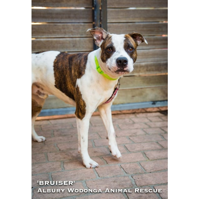 Photo of Bruiser