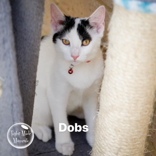 Photo of Dobs **On Trial With My New Family**