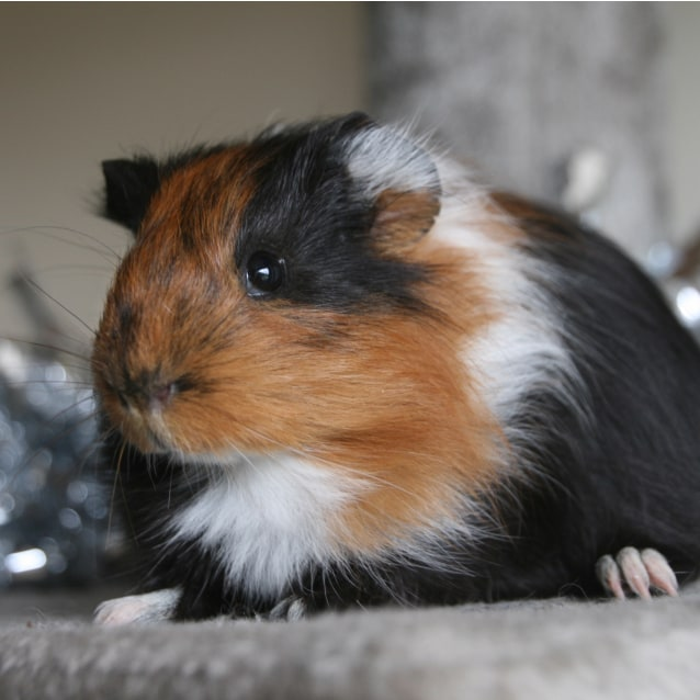 Photo of Szeth
