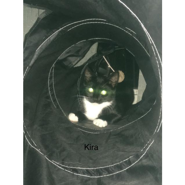 Photo of Kira (Located In Sandringham)