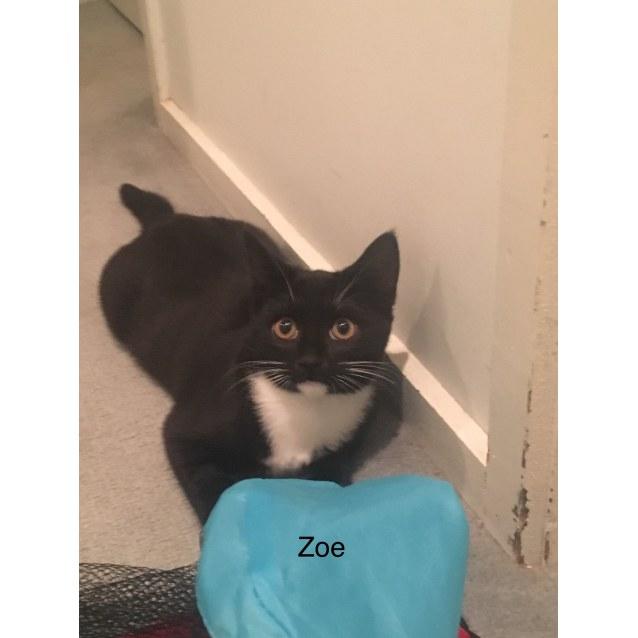 Photo of Zoe (Locate In Pascoe Vale)