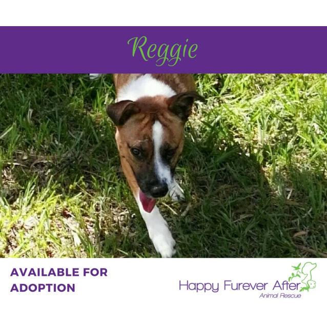 Photo of Reggie