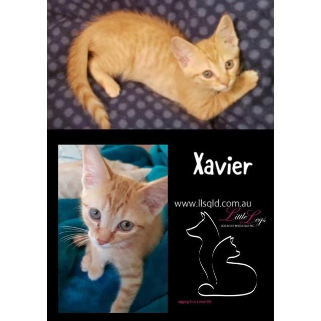 Photo of Xavier